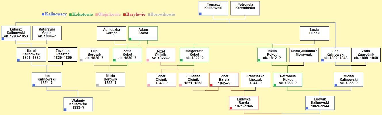 Wykres koligacji Kokotów i Kalinowskich poprzez Olejników, Borowików i Baryłów